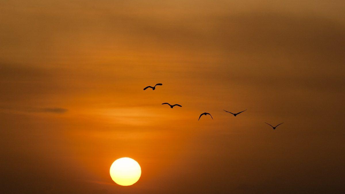 Rota y el sol